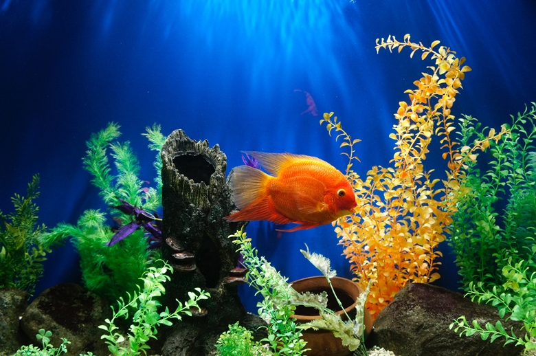 金魚のぶくぶく静か